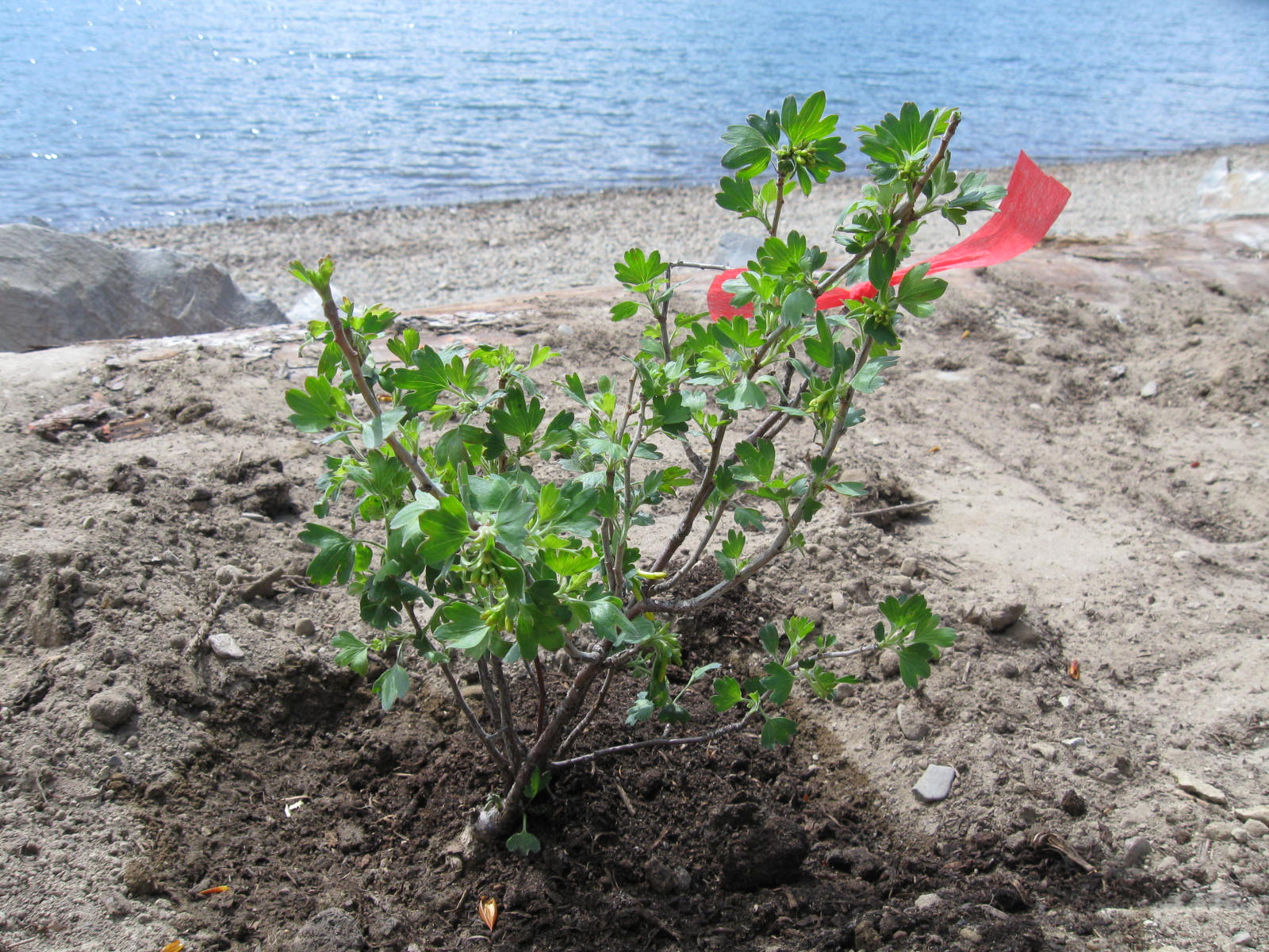 Kinsmen Beach Work Party – May 16th