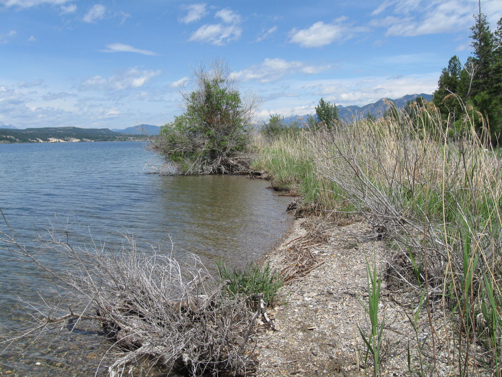 """Want to remove the """"weeds"""" in Lake Windermere?  Be careful what you wish for"""